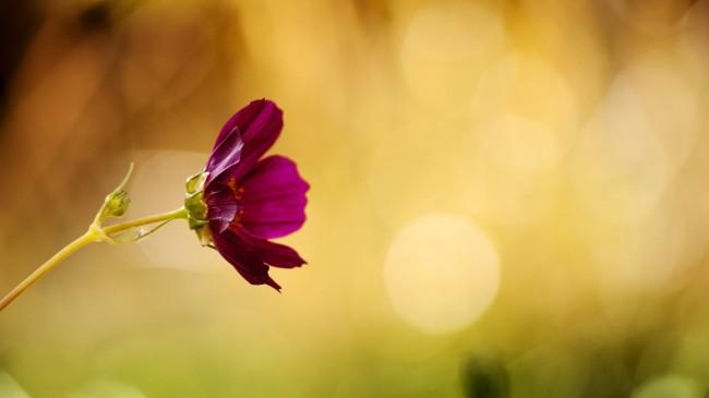flower-947666_1280