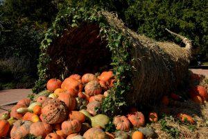pumpkins-1004417_1280