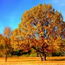5 Pictures That Tell You Autumn Is Coming