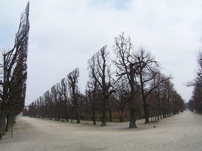 treesschronburnpark